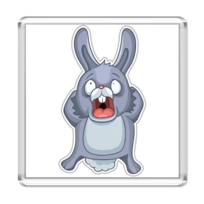 Магнит Кролик