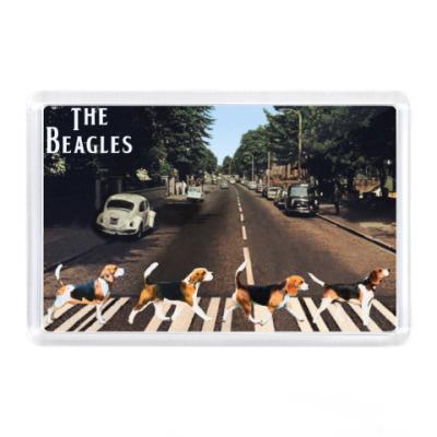 Магнит The Beagles (бигли)