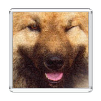 Магнит Собака Подмигивака