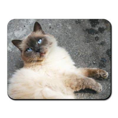 Коврик для мыши Голубоглазый кот