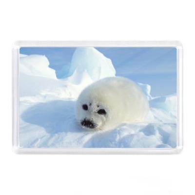 Магнит Тюлень