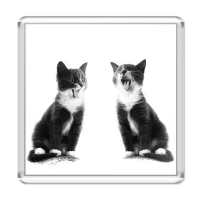 Магнит Две кошки