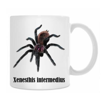 Хenesthis