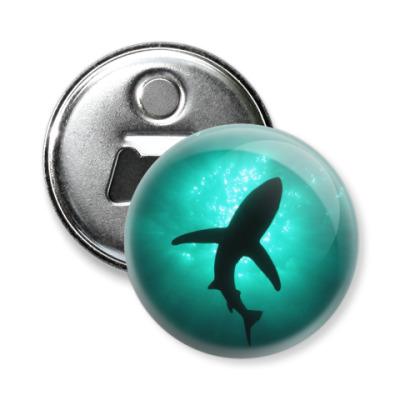 Магнит-открывашка Акула
