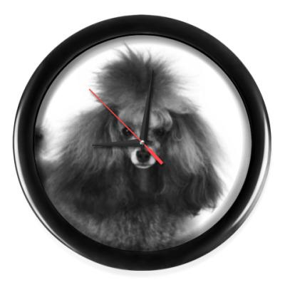 Настенные часы Пудель