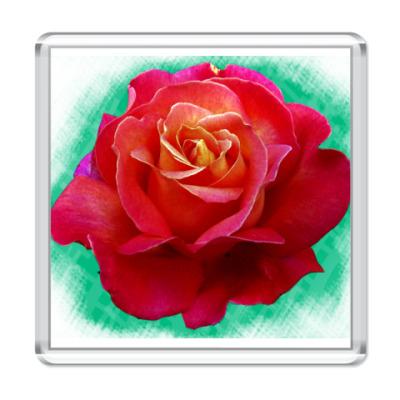 Магнит Роза
