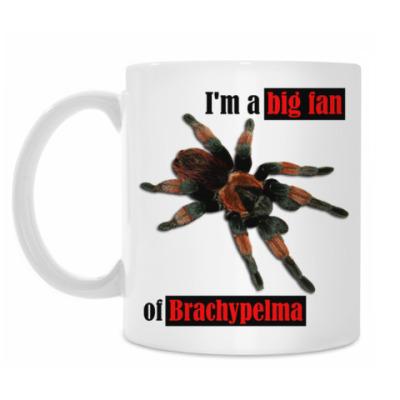 Кружка Brachypelma