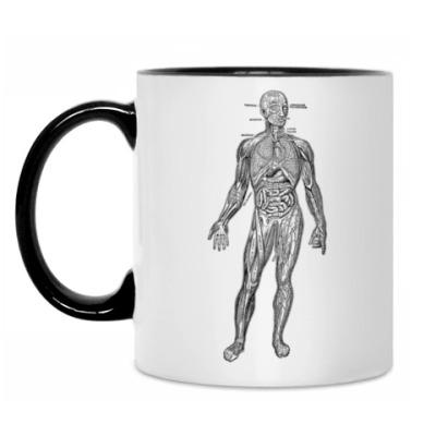 Кружка Анатомия