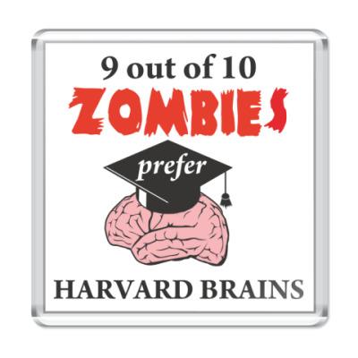 Магнит Harvard brains